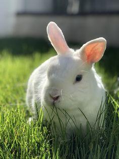 White Rabbits, Bunny, Animals, White Bunnies, Cute Bunny, Animales, Animaux, Animal, Rabbit