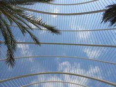 Like a bird in a cage   Umbracle, Santiago Calatrava, Valencia