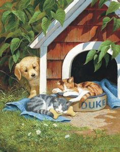 Chats coffre aux tresors
