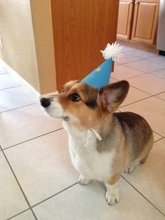 Turned six years old today! Submitted by clau510