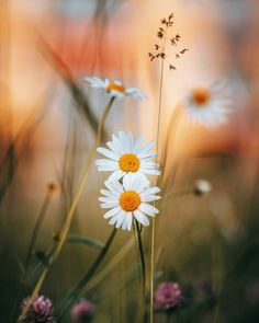 Image may contain: plant, flower, sky, outdoor and nature Flowers Nature, Wild Flowers, Beautiful Flowers, Nature Landscape, Daisy Love, Flower Aesthetic, Jolie Photo, Flower Wallpaper, Flower Photos