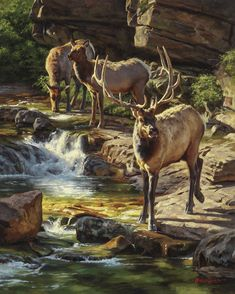 Current Work — The Art of Dustin Van Wechel Wildlife Paintings, Animal Paintings, Animal Drawings, Art Drawings, Wildlife Decor, Wildlife Art, Elk Pictures, Animal Art Prints, Animal Coloring Pages
