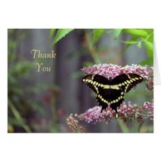 Giant Swallowtail 8852 TY Card - black gifts unique cool diy customize personalize