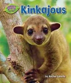 Kinkajous are cute but man does their bite hurt. I can tell you from experience, it is terrible!