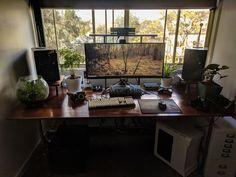 Homemade oak desk, new plant and a beautiful day Gaming Room Setup, Pc Setup, Desk Setup, Home Office Setup, Home Office Design, Dream Desk, Oak Desk, Desk Inspiration, Gamer Room