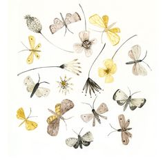 Art print Moths and Flowers illustration - A4 | Felt