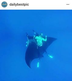 ANOTHER STUPID ACT.  Please help REPORT this posting.  They cant even tell the difference between stingrays and manta ray.