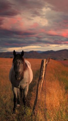 - Art Of Equitation All The Pretty Horses, Beautiful Horses, Animals Beautiful, Beautiful Creatures, Beautiful Sky, Cute Horses, Horse Love, Cavalo Wallpaper, Arte Equina