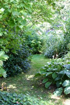 lush shady grassy space :: Purple Area