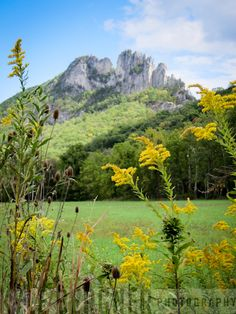 Seneca Rocks, WV. Can't believe I grew up 45 minutes away and have never been here!