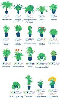 Rośliny doniczkowe w domach są nie tylko ozdobą, ale także poprawiają jakość powietrza, którym oddychamy. Naukowcy z NASA opracowali zestawienie 18 roślin, które najlepiej radzą sobie z filtrowaniem powietrza i usuwaniem z niego toksyn. Prosta infografika od NASA przedstawia gatunki roślin oraz substancje, które te rośliny usuwają z otoczenia. Najważniejsze z tych szkodliwych związków to…