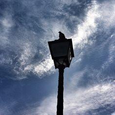 """""""Ciel ! Mon oiseau !"""" #pigeon#sky#paris#street#nuage#bleu"""