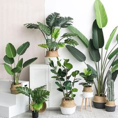 Artificial Plants Green Turtle Leaves Garden Home decor 1 Bouquet Mexican Autumn Decoration a. Artificial Plants Green Turtle Leaves Garden Home decor 1 Bouquet Mexican Autumn Decoration artificial grass plant, Plantas Indoor, Jardin Decor, Decoration Plante, Best Indoor Plants, Outdoor Plants, Indoor Bonsai, Indoor Herbs, House Plants Decor, Fake Plants Decor