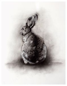 rabbit giclee print from original charcoal drawing