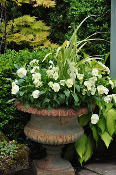 White pansies with greenery will give a serene look all winter long.