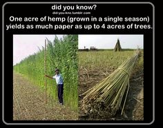 DID YOU KNOW? ONE ACRE OF HEMP(GROWN IN A SINGLE SEASON) YIELDS AS MUCH PAPER AS UP TO 4 ACRES OF TREES.