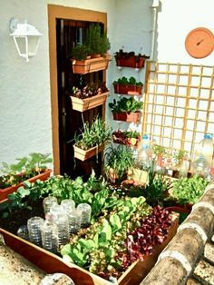 Homestead Gardening Urban - Small space gardening ~ This tiny balcony vegetable garden only uses 3 square yards of space and grows 21 varieties Small Balcony Garden, Small Space Gardening, Balcony Gardening, Small Gardens, Garden Planters, Pot Jardin, Plantar, Edible Garden, Growing Vegetables