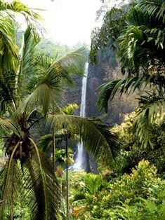 Ecuador, Bali, Plant Leaves, Plants, Scorpio, Scorpion, Flora, Plant