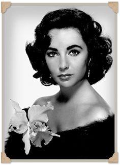Vintage Photos Of Elizabeth Taylor | taylor2