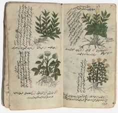 Milady's Pantry & Still Room: Unraveling the Mysteries of Herbal Medicine