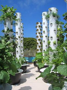 ROOF TOP GARDENING:    These Tower Gardens are so cool and can be used anywhere, even on the roof, patios, porch, anywhere they can get sun!!   Please visit www.debs.towergarden.com for more info.