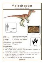 Natuurkaart Dinosauriërs – Velociraptor Boy Birthday, Birthday Ideas, Kindergarten, Montessori, School, Random, Leo, Teacher, English