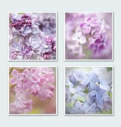 """Lilac Photography Set - Four 5 x 5 Floral Photographs,  Purple, Pink, Blue, Romantic, Feminine Wall Decor (by GeorgiannaLane, on Etsy.com) (title: """"Many Shades of Lilac"""") (""""Lilacs come in such an array of colors – not just lilac! These varieties are: 1. Alice Christensen 2. Pocahontas 3. President Lincoln 4. Maiden's Blush"""")"""