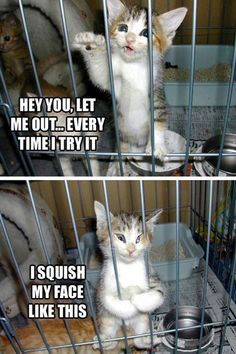 Caged Kitteh