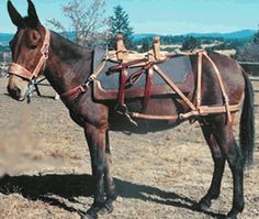 Horse Pack Saddles Saddles And Tack Pinterest Saddles Horse