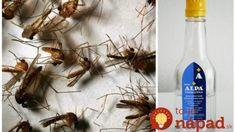 Vždy, keď išla starká na pole, nastriekala si na zápästia trochu tejto zmesi: S komármi a muchami mala celý deň pokoj!