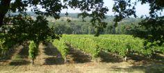 Vignobles de Buzet