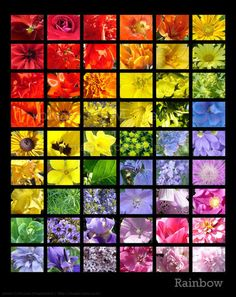 flower rainbow - art-and-pictures Screencap
