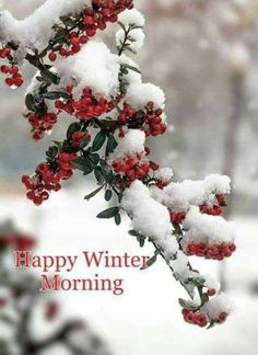 ❤ Snow and Winter berries