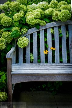 Two Black-Eyed Susans poke through a bench in the #healing garden at Dana-Farber/Brigham and Women's Cancer Center at @Milford Bovell Bovell Regional Medical Center