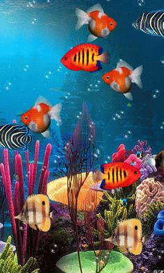 Animated Aquarium Gif pictures) ⭐ Pictures for any occasion! Colorful Fish, Tropical Fish, Fish Gif, Sea Creatures Drawing, Motion Wallpapers, Fish Background, Saltwater Fish Tanks, Underwater Painting, Water Patterns