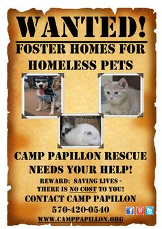 Foster Homes needed   Please repin