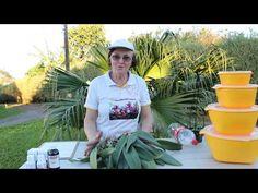 Pacote de Orquídeas com frete Grátis - YouTube