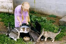 """Bill Coleman's """"Hannah With Friends"""" cats, Amish collection"""