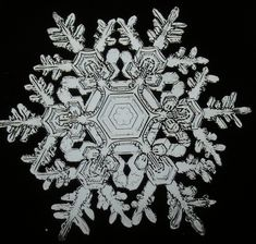 Wilson Bentley snow flake photo