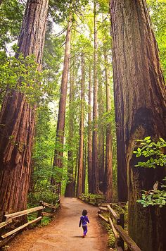 Muir Woods, #California