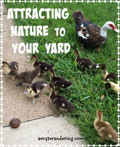 Attracting Nature to Your Yard - These tips will have your yard looking like a nature preserve in no time!