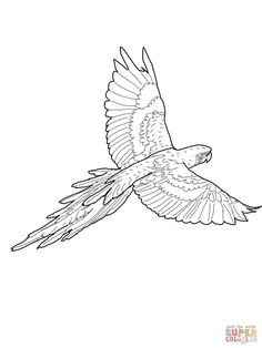 Blue And Yellow Macaw Coloring Page