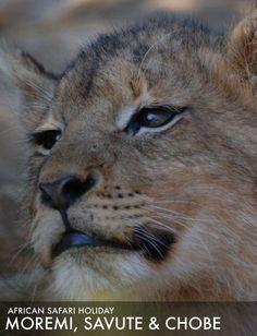 African Safari Tour Moremi, Savute and Chobe Safari Holidays, Safari Adventure, African Safari, Tours, Animals, Parks, Animales, Animaux, Animal