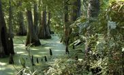 greenville cypress preseve, mississippi