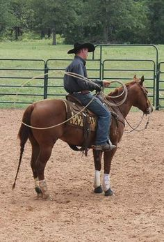 61 Best Rope Horses for Sale images in 2019 | Horses, Horses for