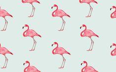 flamingo - Google zoeken