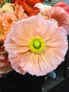 poppies - love the colour!