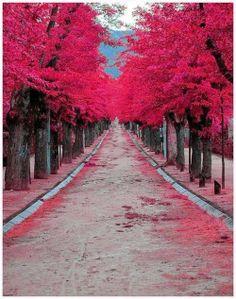 Burgundy Street |  Madrid, Spain | http://www.etips.com/