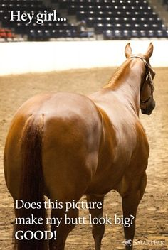 I am a horse judger on our FFA team and many of my horses joke with me that I am obbsessed with looking at a horse(mostly quarter horse's) butt