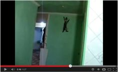 Spider Cat! :D Click the link to watch: http://awesomeanimals01.blogspot.co.il/2013/08/spider-cat.html#.UgYcVX_7Bic